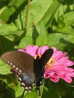 Jams_and_butterflys_0131