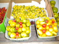 Pear_and_grape_tomatoes_013